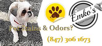 Pet Odor And Stain Removal Emko S Carpet Cleaning